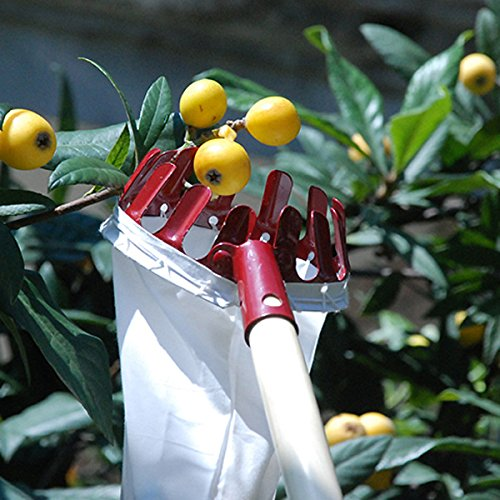 Home-organizer Tech Fruit Picker