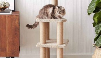 The 9 Best Cat Tree Houses In 2020