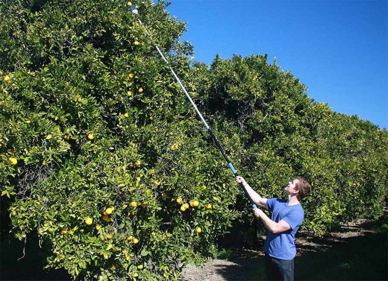 The 11 Best Fruit Pickers 2021