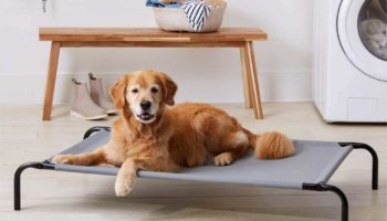The 11 Best Elevated Dog Beds